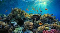 Ilustrasi terumbu karang (iStock)