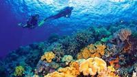 Snorkeling di Wakatobi
