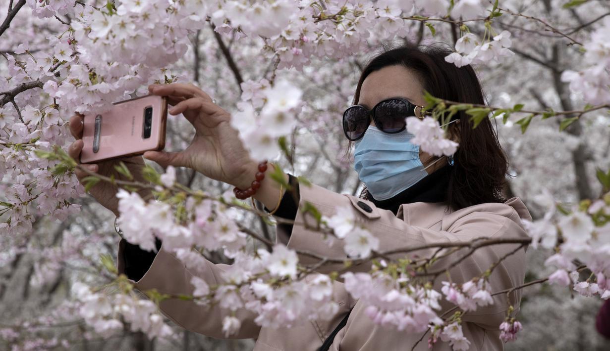 Foto Bunga Sakura Bermekaran Pikat Warga Beijing Keluar Rumah