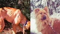 5 Kisah Anjing Sebelum dan Sesudah Dipelihara Ini Bikin Haru (sumber: Boredpanda)