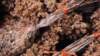 Ilustrasi bunga edelweis. (dok. unsplash/Elang Wardhana)
