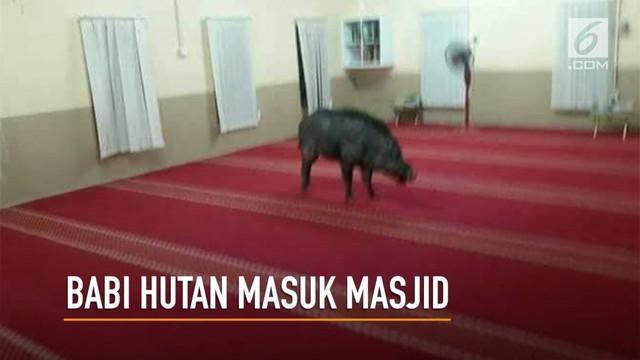 Heboh, seekor babi hutan masuk ke dalam masjid dan menyeruduk jemaah di Malaysia.