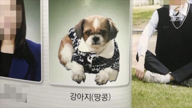 Seekor anak anjing masuk dalam buku tahunan sekolah sebagai staf administrasi.