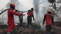 Petugas Manggala Agni berusaha memadamkan kebakaran lahan yang dekati rumah warga di Kabupaten Kampar. (Liputan6.com/M Syukur)