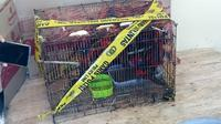 Barang bukti puluhan burung Nuri dititipkan di Balai Konservasi Sumber Daya Alam,