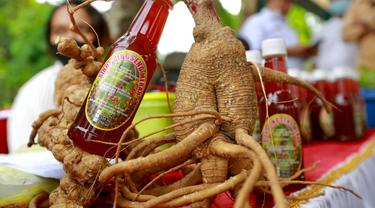Budidaya gingseng merah di Banyuwangi (Dian Kurniawan/Liputan6.com)