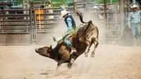 Ilustrasi rodeo (iStock)