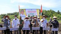 Gubernur Sulawesi Barat Ali Baal Masdar saat pencanangan penanaman kedelai di Kecamatan Tinambung, Polman (Foto: Liputan6.com/Abdul Rajab Umar)