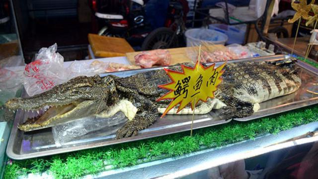 Sate Buaya Jadi Makanan Populer Di Cina Tertarik Mencoba