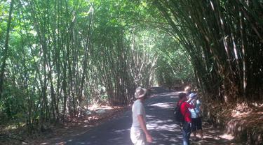 Aturan Unik Jaga Hutan Bambu Warisan Abad ke-13 di Penglipuran