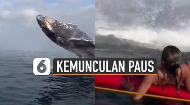 Sedang asyik berendam di laut. wisatawan ini melihat paus berukuran besar melompat dan muncul ke permukaan laut.