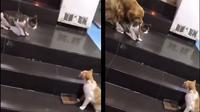Anjing lerai kucing (Sumber: Twitter/askmenfess)