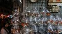 Pejualan ikan cupang naik signifikan paska merebaknya DBD di kota Tasikmalaya (Liputan6.com/Jayadi Supriadin)