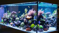 Ilustrasi akuarium (iStock)