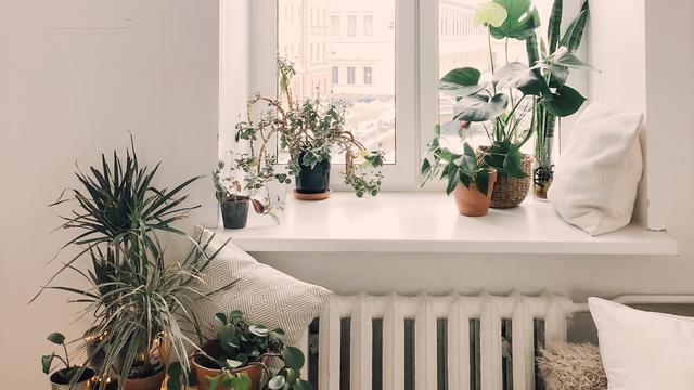 Ilustrasi tanaman di dalam ruangan/ Pexels