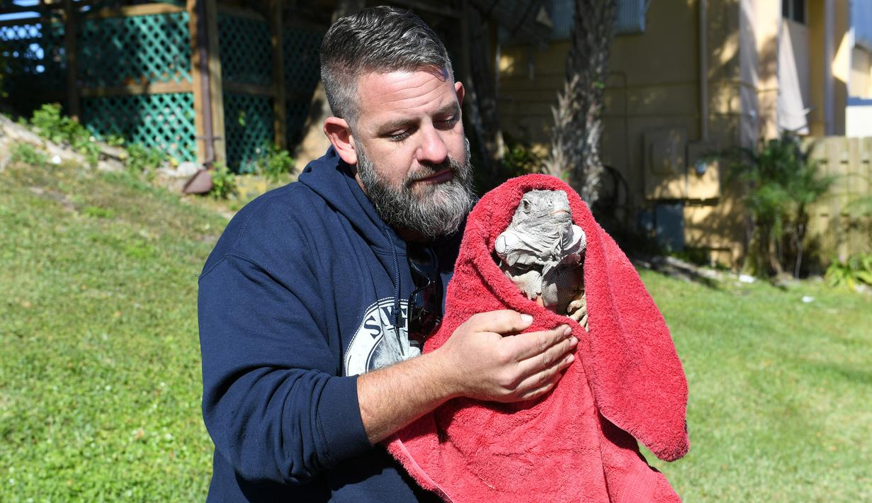 Seorang petugas membungkus iguana yang kaku kedinginan dengan selimut di Taman Nasional Everglades, Florida selatan, 6 Januari 2018. Sejumlah hewan ikut merasakan temperatur dingin ekstrem yang tengah melanda pesisir timur Amerika Serikat. (AP Photo)