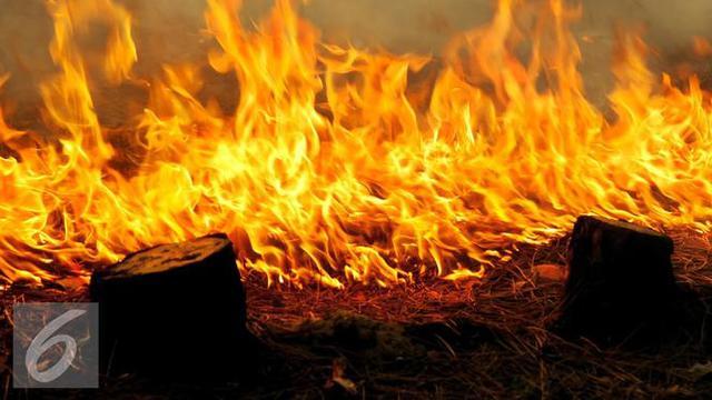 Bukan Kelapa Sawit Puntung Rokok Jadi Pemicu Kebakaran