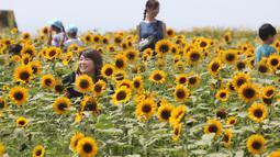 Pengunjung menikmati lautan bunga matahari yang bermekaran penuh di taman Yokosuka dekat Tokyo, Senin (17/8/2020). Bunga ini adalah bunga yang dikenal masyarakat Jepang sebagai bunga musim panas. (AP Photo/Koji Sasahara)
