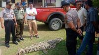 Buaya yang ditangkap warga Desa Sikakak, Kabupaten Kuantan Singingi, akhirnya mati karena lemas. (Liputan6.com/Dok BBKSDA Riau/M Syukur)