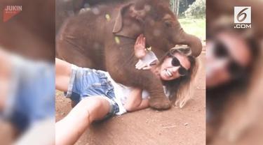 Seekor bayi gajah mencaoba berbaring di atas tubuh turis wanita di Thailand.