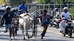 Warga ikut menyemangati para peserta saat memacu tunggangannya dalam perlombaan balap gerobak sapi di Kolombo, Sri Lanka, Sabtu (20/4). (LAKRUWAN WANNIARACHCHI/AFP)