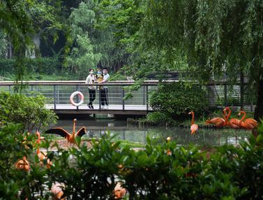 FOTO: Kebun Binatang Wuhan Kembali Dibuka