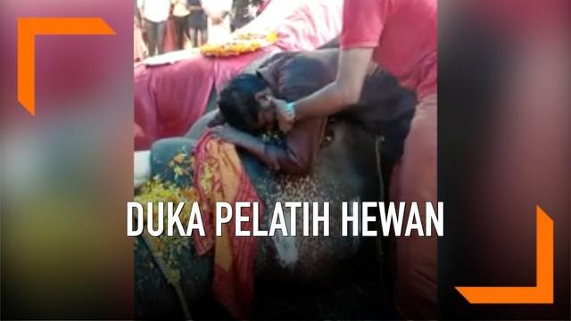 Kepergian seekor gajah bernama Parthan membuat seorang pelatih hewan berduka di India. Pelatih tersebut telah bersama Parthan selama 10 tahun.