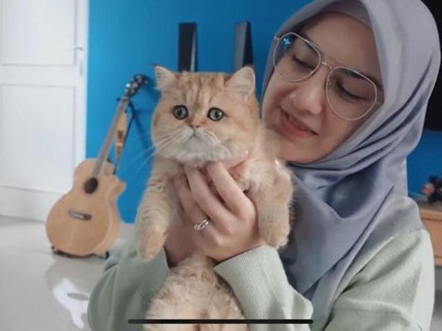 Ammar Zoni Dan Irish Bella Pelihara Kucing Rusia Seharga Motor Showbiz Liputan6 Com