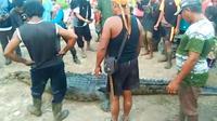 Buaya pemangsa manusia yang ditangkap warga di Sungai Lakar, Kecamatan Sungai Apit, Kabupaten Siak. (Liputan6.com/Istimewa/M Syukur)