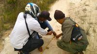 Petugas BBKSDA Riau mengukur jejak Harimau Sumatra yang ditemukan di Desa Karya Indah, Kabupaten Kampar. (Liputan6.com/M Syukur)