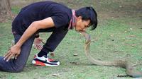 Rizki Ahmat saat bersama ular king cobra di Taman Tugu Soekarno, sebelum dipatuk ular peliharaannya di Bundaran Besar, Kota Palangkaraya, Kalimantan Tengah, Minggu pagi, 7 Juli 2018. (Dok. Kalteng Post/Jawa Pos Group)
