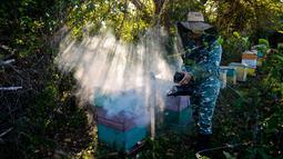 Peternak mengasapi sarang lebah saat akan memanennya di sebuah peternakan di Navajas, Matanzas, Kuba, 21 Maret 2019. Madu dari tempat ini menjadi dambaan dari pasar Eropa. (YAMIL LAGE/AFP)