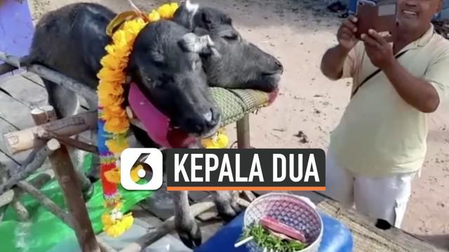 Seekor anak kerbau lahir dengan memiliki dua kepala di Thailand. Hewan tersebut mati sesaat setelah dilahirkan. Meski demikian, warga tetap mengabadikannya karena dipercaya membawa keberuntungan.