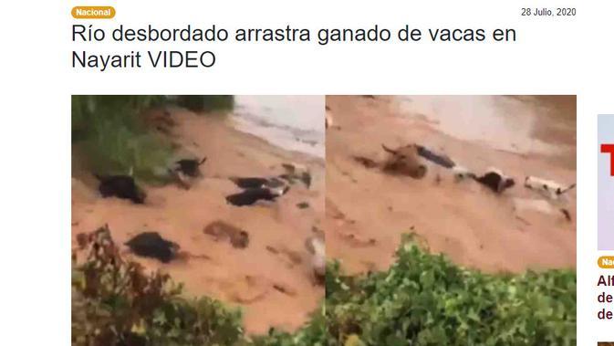 Cek Fakta Liputan6.com menelusuri klaim video sejumlah sapi hanyut terbawa arus banjir NTT