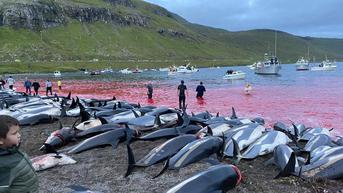 Brutal, Penyembelihan 1.400 Lumba-lumba di Kepulauan Faroe