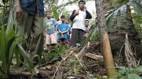 Lokasi penemuan jasad tanpa kepala bersabuk TNI di perkebunan sawit di Deli Serdang, Sumut. (Liputan6.com/Reza Efendi)