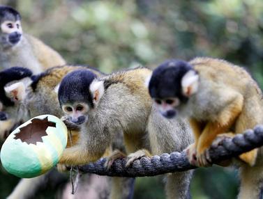 Lucunya Para Binatang Saat Dapat Telur Paskah di London Zoo