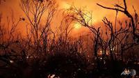 Ilustrasi kebakaran hutan dan lahan di Australia selama musim kemarau, lazim dikenal sebagai fenomena Bushfire. (Rob Griffith / AFP PHOTO)