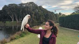 Sydney ibu kota Austaralia dipenuhi banyak tamann dengan hamparan ruput hijau. Salah satu taman yang cukup menarik perhatian Sahila ialah Centennial Park. Ia pun tak takut  bermain bersama burung kakatua. (Liputan6.com/IG/sahilahisyam)