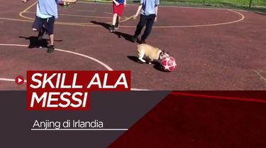 Berita video seekor anjing yang memiliki keahlian menggiring bola seperti Lionel Messi.