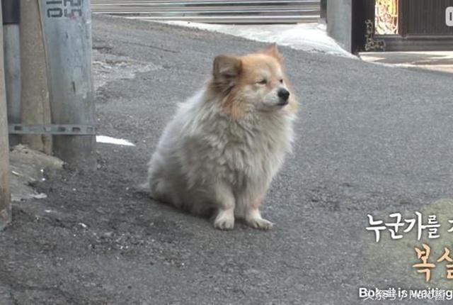 Fu Si adalah anjing yang begitu setia | Copyright odditycentral.com