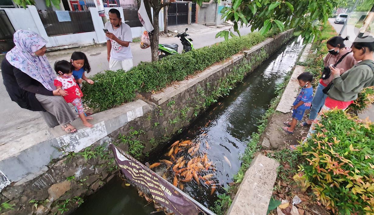 Warga bersama anak-anak melihat ikan yang dibudidaya di sepanjang saluran air di Puri Pamulang, Tangerang Selatan, Minggu (13/8/2020). Saluran air atau selokan sepanjang 400 meter dimanfaatkan warga untuk budidaya ikan dan hiburan gratis bagi warga sekitar. (Liputan6.com/Fery Pradolo)