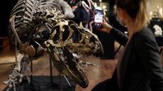 Pengunjung memotret kerangka dinosaurus Allosaurus di rumah lelang Drouot, Paris, Prancis, Sabtu (10/10/2020). Kerangka dinosaurus yang ditemukan di daerah Johnson, Wyoming, AS, tersebut akan dilelang pada 13 Oktober 2020 dan diperkirakan harganya antara 1-1,2 juta euro. (AP Photo/Thibault Camus)