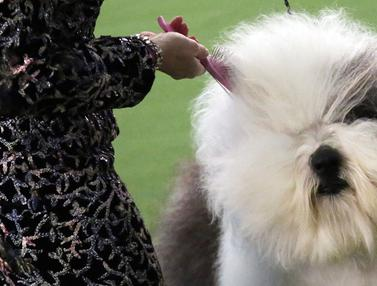 Kontes Westminster Kennel Club Dog Show
