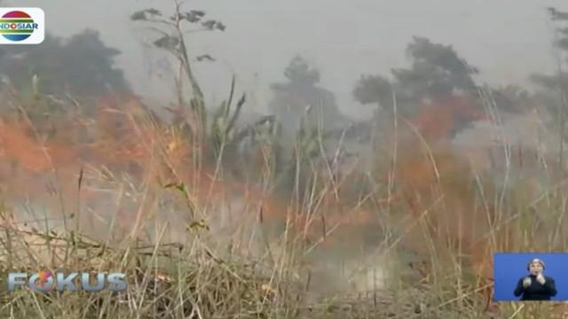 Pepohonan dan ilalang di kaki Gunung Guntur, Garut, Jawa Barat, hangus dilalap api. Api diduga datang akibat kemarau panjang.
