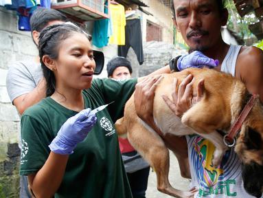 Dokter hewan dari Humane Society Internasional (HSI) menyuntikkan obat anti rabies pada anjing milik salah satu warga Payatas, Manila, Filipina, Selasa (26/9). Anggota HSI memberikan vaksin rabies gratis untuk hewan di Filipina. (AP Photo/Bullit Marquez)