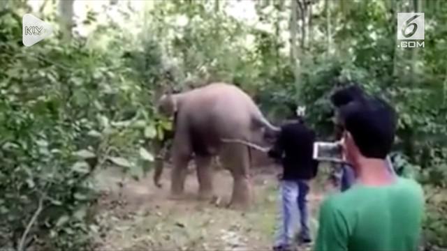 Video tiga pemuda India menyiksa kawanan gajah tersebar di media sosial. Ketiga pelaku akhirnya ditangkap oleh petugas setempat.
