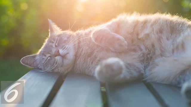 Selain Kucing Ini 4 Aksi Viral Makan Hewan Hidup Dan Mentah Global Liputan6 Com