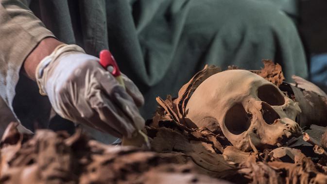 Arkeolog melakukan penelitian pada tengkorak yang ditemukan di sebuah makam kuno di kota Luxor, Mesir (9/9). Menurut Menteri Purbakala Mesir, mumi-mumi tersebut merupakan mumi pandai emas kerajaan dan keluarganya. (AFP Photo/Khaled Desouki)