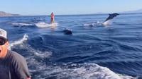 Seorang wanita yang sedang bermain wakeboarding di laut tiba-tiba dikelilingi oleh lumba-lumba. Sumber: Brightside.me.